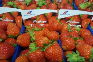 Start of Dutch greenhouse strawberry season