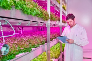Staay Food Group launches website about Vertical Farm project.