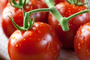 Product of the month: tomato