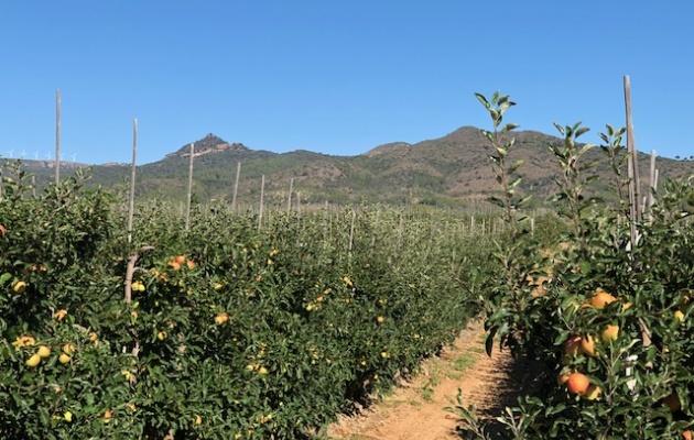 Ad van der Staaij about the Spanish apple season | News